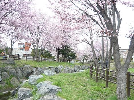 桜4-s.jpg