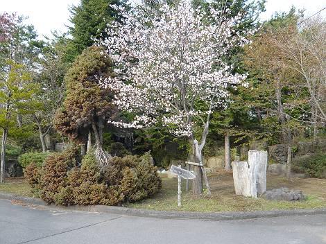 桜5-s.jpg
